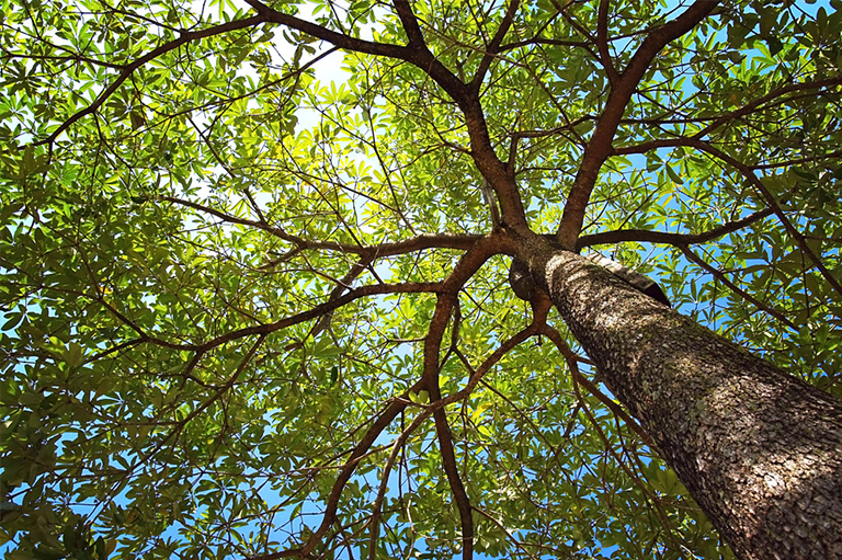 looking up into tree